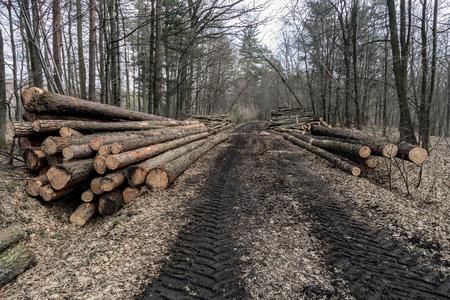 logging industry: Logging industry, pile of several tree trunks