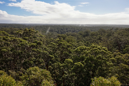 Beautiful view from Dave Evans Bicentennial Tree that was used for monitoring fires in Western Australia