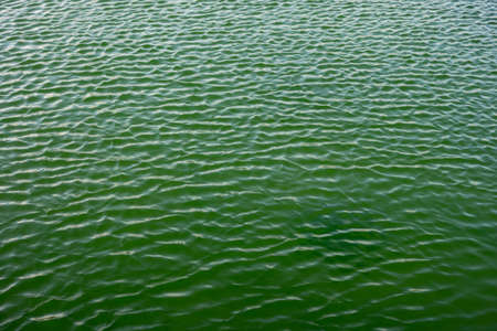 Ripples on a green water surface with reflections and shadows as a texture background