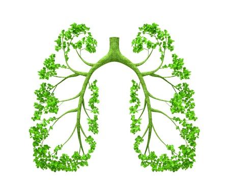 pulmon sano: El �rbol formando la forma de �rganos humanos, como los pulmones