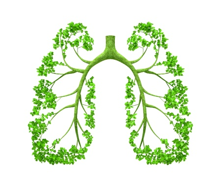 human lungs: The tree forming the form of human organ, as lungs