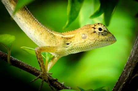 lizard action photo