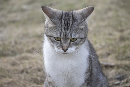 The beautiful, gray young cat sits and looks a thoughtful look. Imagens