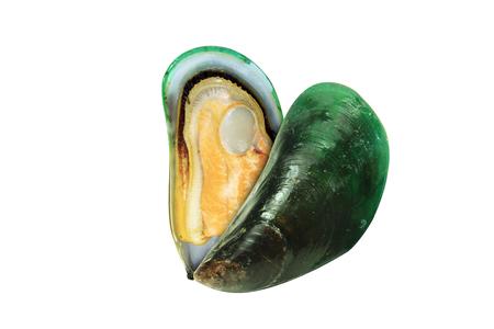 perejil: mejillones frescos aislados en el fondo blanco, cocidos concha de mejillón verde, fresco concha de mejillón verde, media concha concha del mejillón verde, mejillones NewZealand