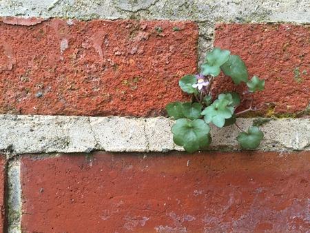 sone: Flowers in brick. Stock Photo