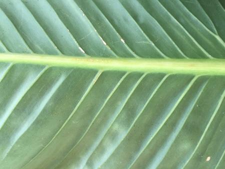 texture: Leaf texture