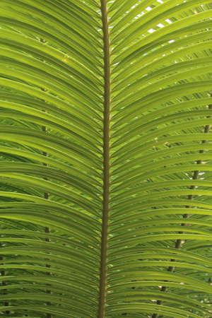 Fern leaf in Mae Hong Sorn, Thailand