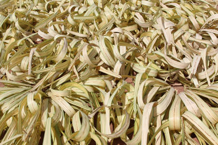 A lot of yellow dry leaves lying on the ground  Stock Photo