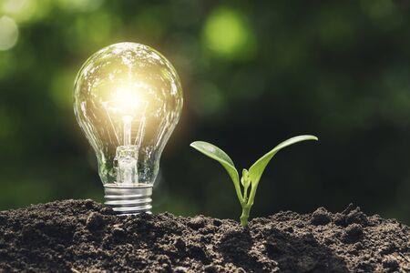Bombilla con planta joven por concepto de energía puesta en el suelo en un fondo verde suave de la naturaleza.