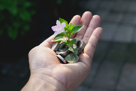 coins in hand with plant concept.