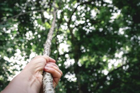 Closeup hand of person holding rope in forest nature concept is for idea or sport.
