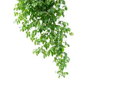 Green leaves tree on isolated background make for frame product concept.