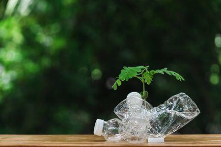 Plants inside plastic bottle  on wooden in nature background. global warming concept.