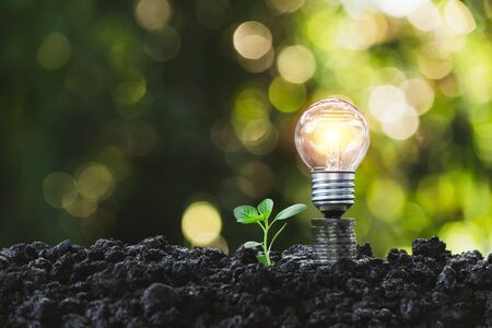 Light bulb with  young plant for energy concept put on the soil in soft green nature background.