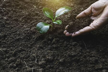 Close up hand of person holding abundance soil to young plant for agriculture or planting peach. Фото со стока