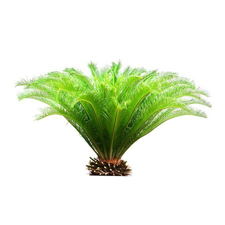 Palm leaves isolated on white background for decor your project. Фото со стока