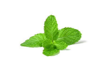 Fresh mint leaves isolated on white background. Фото со стока