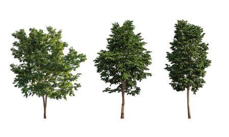 Set of trees isolated image on white background.