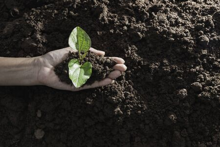 Top view hand of person holding abundance soil with young plant in hand   for agriculture or planting peach nature concept. Фото со стока