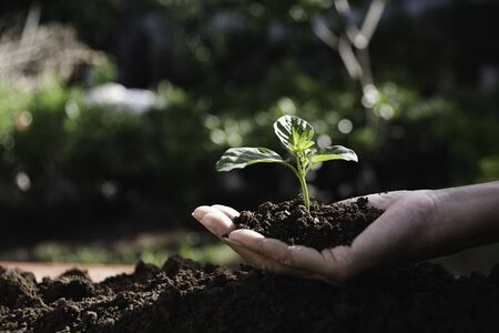 Hand of person holding abundance soil with young plant in hand   for agriculture or planting peach nature concept. Фото со стока