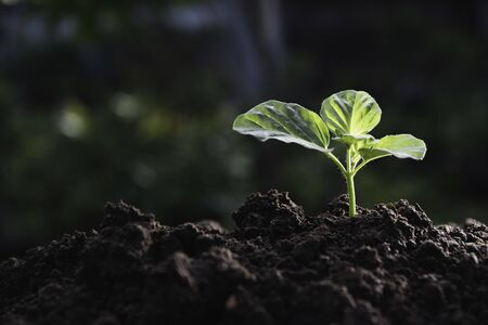 Young plant growing on fertile soil in garden for agriculture concept.