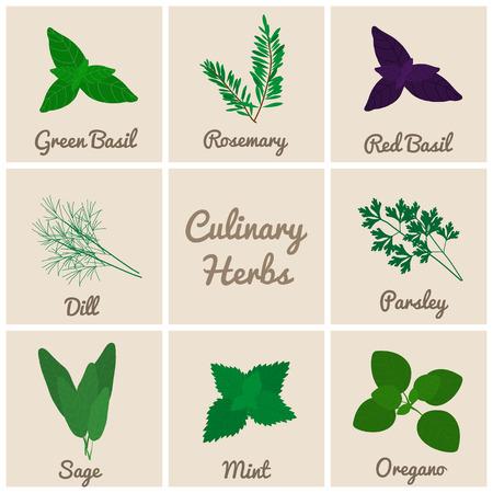 Culinary herbs set. Green basil, rosemary, red basil, dill, parsley, sage, mint, oregano.