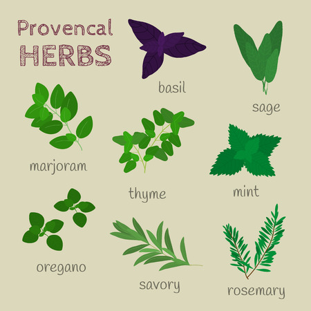 savory: Provencal herbs set. Oregano, rosemary, red basil, sage, mint, thyme, marjoram, savory.