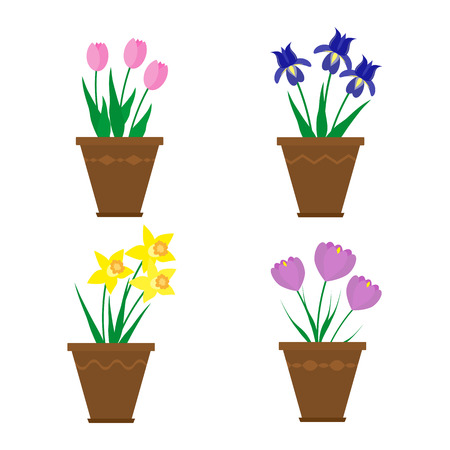 iris blossom: Spring flowers in pots isolated on white background. Blue irises, purple crocuses, yellow narcissus, pink tulips. Collection of potted spring flowers in flat style. Illustration