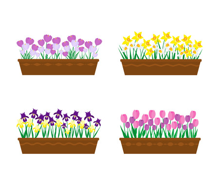 Spring flowers in long containers isolated on white background. Violet, yellow irises, purple, white crocuses, yellow, white narcissus, pink, purple tulips. Collection of potted spring flowers. Illustration