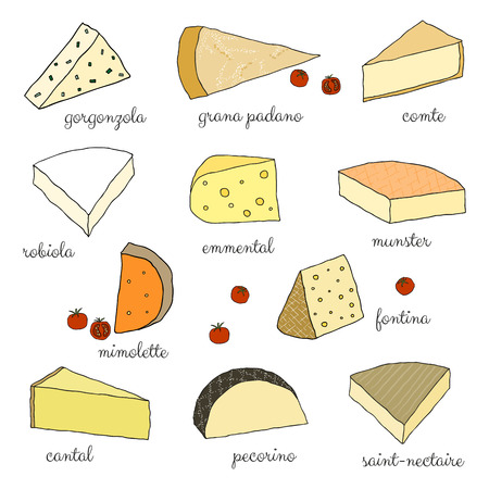 cantal: Hand drawn cheese isolated on white background. Illustration