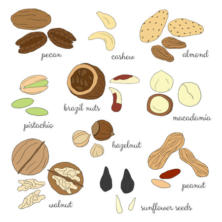 brazil nut: Hand drawn detailed nuts isolated on white background. Pecan, cashew, almond, brazil nut, pistachio, macadamia, hazelnut, walnut, peanut, sunflower seeds.