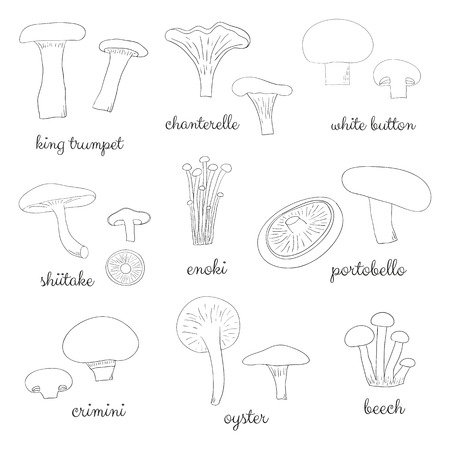 edible: Different hand drawn outlined mushrooms isolated on white background. Edible mushrooms set. King trumpet, chanterelle, white button, shiitale, enoki, portobello, crimini, oyster, beech.
