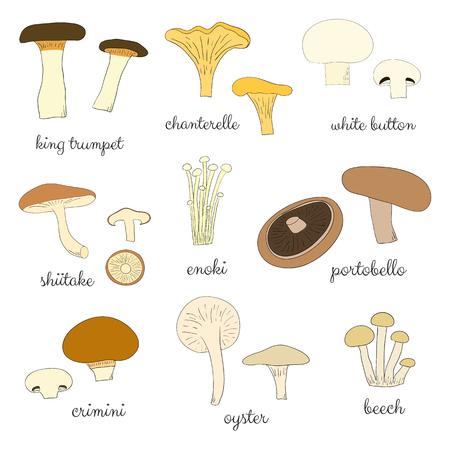 Different hand drawn mushrooms isolated on white background. Edible mushrooms set. King trumpet, chanterelle, white button, shiitale, enoki, portobello, crimini, oyster, beech.