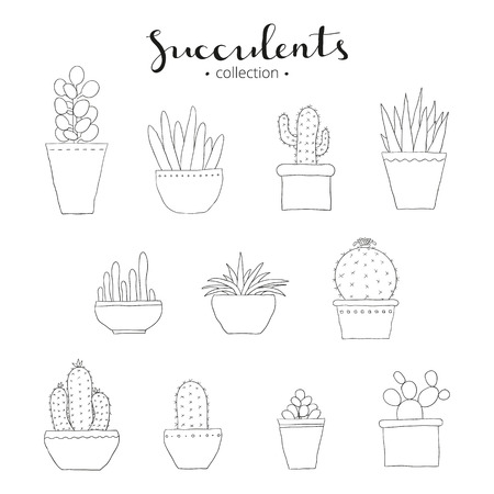 houseplants: Succulent collection. Hand drawn succulents and cactuses isolated on white background. Different doodle succulents. Exotic mexican houseplants. Hand written lettering succulents.