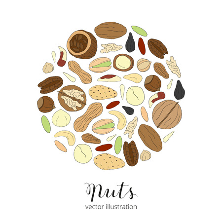 pistachio: Hand drawn detailed nuts composed in circle shape Pecan, cashew, almond, brazil nut, pistachio, macadamia, hazelnut, walnut, peanut, sunflower seeds. Hand drawn nuts in circle. Lettering nuts. Illustration