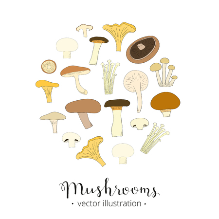 edible: Different hand drawn mushrooms composed in circle shape. King trumpet, chanterelle, white button, shiitale, enoki, portobello, crimini, oyster, beech. Edible mushrooms in circle. Lettering mushrooms. Illustration