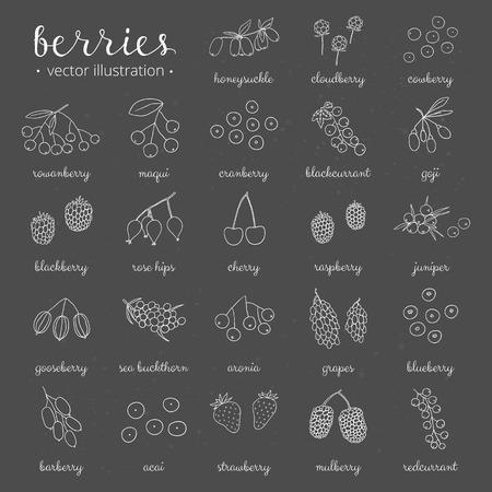 Hand getrokken schets bessen op het bord. Aardbei, goji, duindoorn, kersen, frambozen, berberis, moerbei, kruisbes, jeneverbes, aronia, rozenbottels, kamperfoelie, bergframbozen, maquis. Vector Illustratie
