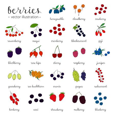 Hand gezeichnet Beeren auf weißem Hintergrund. Erdbeere, Goji, Sanddorn, Kirsche, Himbeere, Berberitze, Mulberry, Stachelbeere, Wacholder, Aronia, Hagebutten, Geißblatt, Moltebeeren, Maqui.