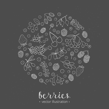 aronia: Hand drawn outline berries in circle shape. Strawberry, goji, sea buckthorn, cherry, raspberry, barberry, mulberry, gooseberry, juniper, aronia, rose hips, honeysuckle, cloudberry, maqui.
