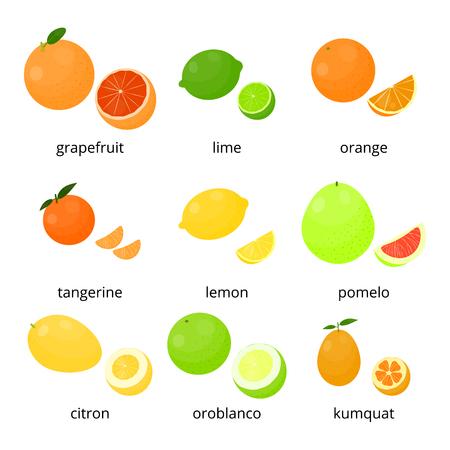 tangerine: Bright cartoon citrus fruits with names isolated on white background. Grapefruit, lime, orange, tangerine, lemon, pomelo, citron, oroblanco, kumquat.