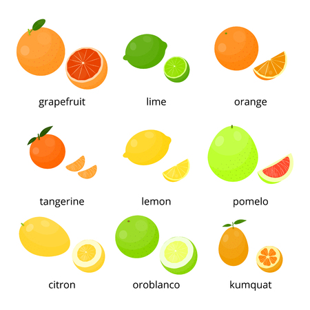 cítricos de dibujos animados brillantes con nombres aislados sobre fondo blanco. Pomelo, lima, naranja, mandarina, limón, pomelo, limón, oroblanco, kumquat. Ilustración de vector