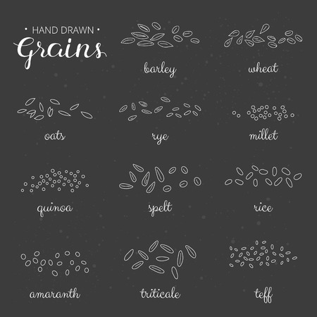 outline cereal grains with names on the blackboard. Barley, wheat, millet, rye, amaranth, teff, triticale, rice, spelt, oats.
