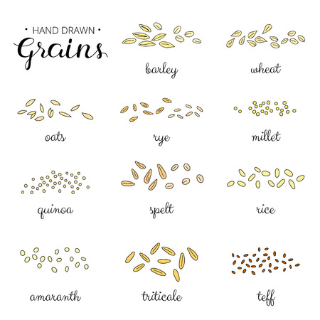 spelt: cereal grains with names isolated on white background. Barley, wheat, millet, rye, amaranth, teff, triticale, rice, spelt, oats. Illustration