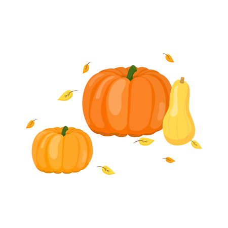 Composition of cartoon pumpkins and butternut squash with leaves isolated on white background. Illustration