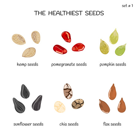 Collection of healthiest seeds with names including hemp, pomegranate, pumpkin, sunflower, chia and flax. Illustration in cartoon style. Illustration