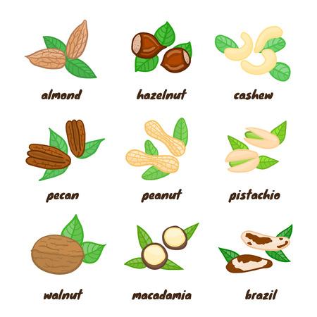macadamia: Colorful doodle nuts including almond, hazelnut, cashew, pecan, peanut, pistachio, walnut, macadamia, brazil isolated on white background.