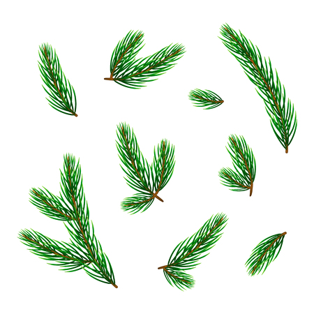 Set of realistic evergreen pine or fir twigs and branches isolated on white background. Standard-Bild - 114881248