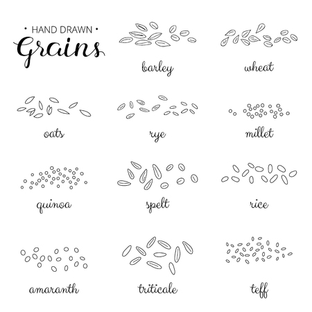 Hand drawn outline cereal grains with names isolated on white background. Barley, wheat, millet, rye, amaranth, teff, triticale, rice, spelt, oats.