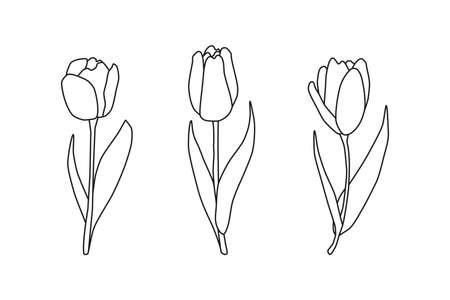 Hand drawn outline spring tulips. Ilustrace