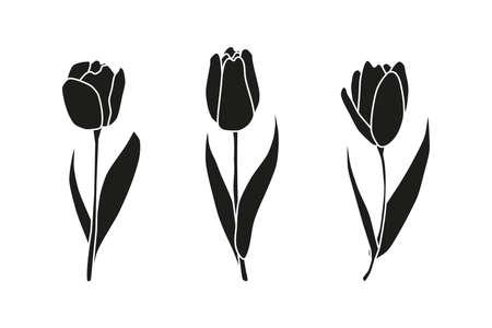 Hand drawn spring tulips.
